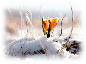 Aloe Home Forever Living | aloehome.gr | Άνοιξη Αναγέννηση της Φύσης